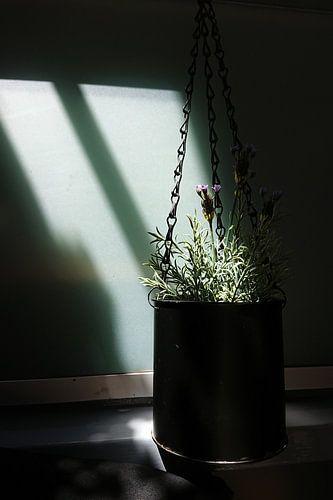Lavendel in een hangende metalen blik van