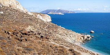 Panorama mit Ziegen und einem blauen Meer auf der Insel Folegandros in Griechenland von Teun Janssen