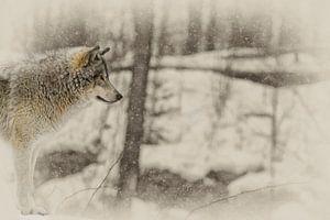 """Loup Gris """"profil"""" von Renald Bourque"""