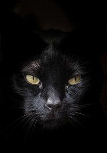Gezicht van zwarte kat met geel/groene ogen tegen een donkere achtergrond van