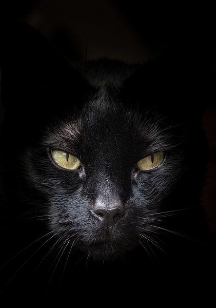 visage de chat noir avec les yeux jaunes verts sur un fond sombre par l 39 artiste hans post. Black Bedroom Furniture Sets. Home Design Ideas