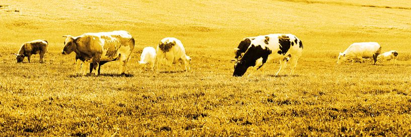 Koeien in Weiland Lisse Nederland Goud van Hendrik-Jan Kornelis