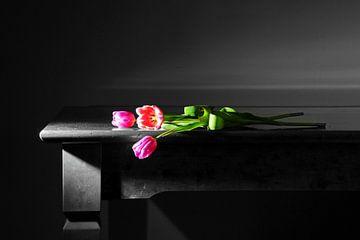 Tulpen tegen het licht van Gerhard Albicker