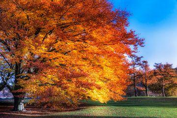 Goudboom van Marcel van Kan