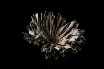 Nature morte Fleur en couleur