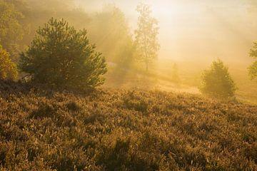 Golden sunrays van Francois Debets
