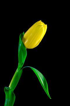 Tulip van Thomas Jäger