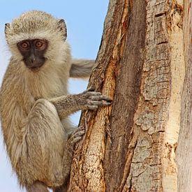 southafrica ... the climbing specialist van Meleah Fotografie
