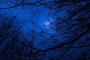 Bos in de nacht van Peter-Paul Timmermans