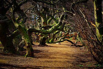 Devil's Wood van Dieter Ludorf