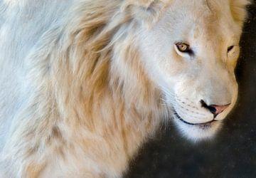 Le lion sur Marcel van Balken