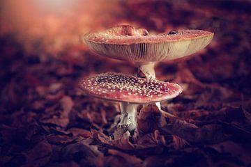 paddenstoel vliegenzwam van Jitske Cuperus-Walstra