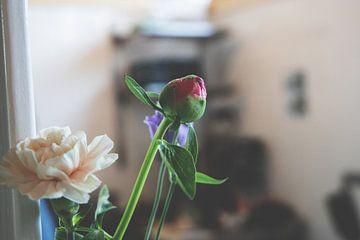 Blüte in Knospe   Rose von Wendy Boon