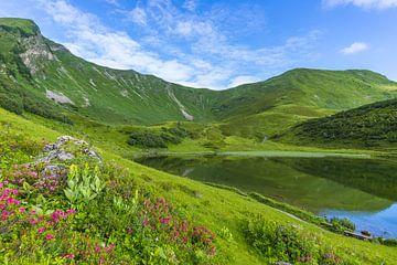 Alpenrosenblüte am Schlappoldsee von Walter G. Allgöwer