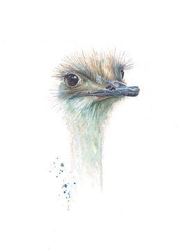 Struisvogel in aquarel van Atelier DT