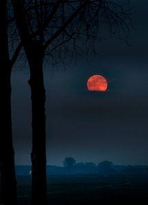 Moon Mystery sur Rop Oudkerk