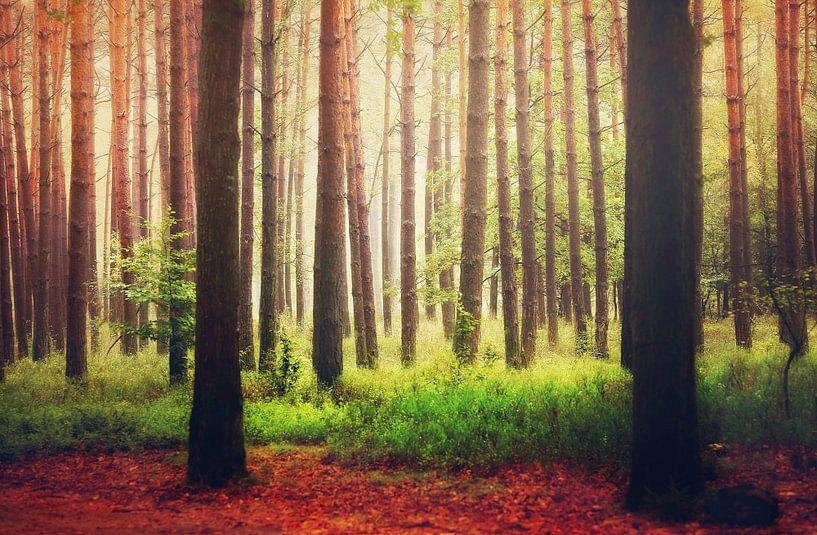 Enlightened Trees... van LHJB Photography