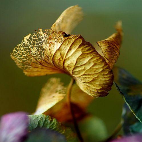 Copperwing von Marlies Prieckaerts