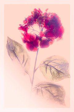 Red flower van Freddy Hoevers