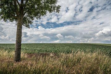 Landwirtschaftliche Landschaft in Herstappe (B) von Martine Dignef