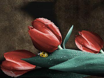 Lieveheersbeestje op tulpen van Harald Fischer