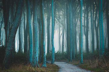 Nebel im Wald von Martin Wasilewski