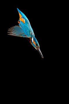 IJsvogel gefotografeerd in het Gooi van Jeroen Stel