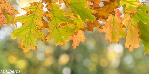 Herfst blad van