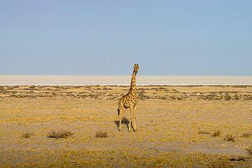 Giraf van Merijn Loch
