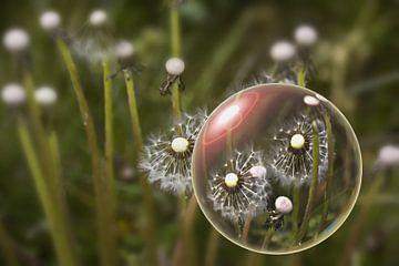 In der Glaskugel- Pusteblumen von Christine Nöhmeier
