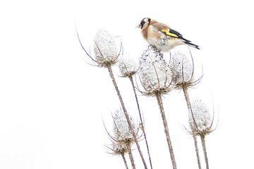 Putter op besneeuwde kaardenbol van Guido Rooseleer