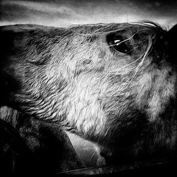 Pferd von Pieter Boon