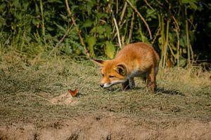 Youthful curiosity