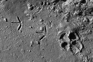 Dierensporen op de maan