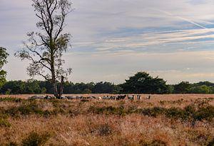 Herde auf der Heide