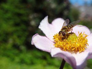 Bloem met insect sur Laurent Scheffer