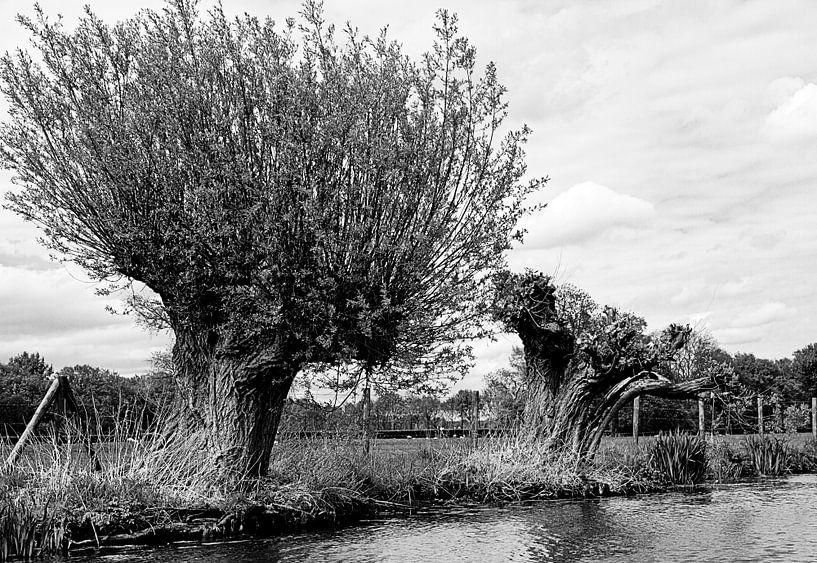 Wilgen aan het water van Niels Eric Fotografie