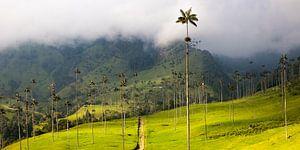 Palmbomen in de Cocora Vallei, Salento, Colombia van