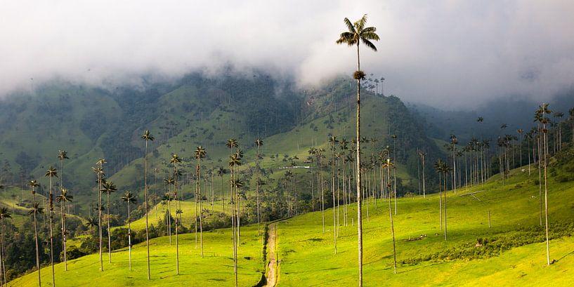 Palmbomen in de Cocora Vallei, Salento, Colombia van Bart van Eijden