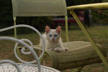 Kat luiert in een oude Franse stoel van joost prins