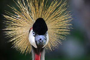 Close-up van een kraanvogel in Gran Canaria van Quint Wijnhoven