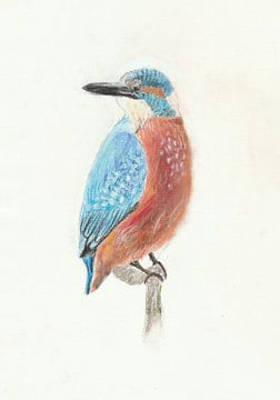 Zeichnung Eisvogel von Jerzy Beerepoot