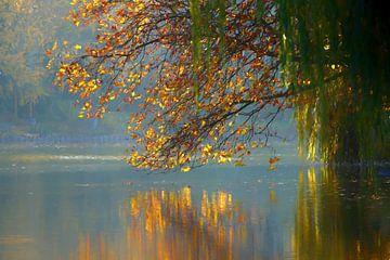 autumn reflection II van Bernd Hoyen