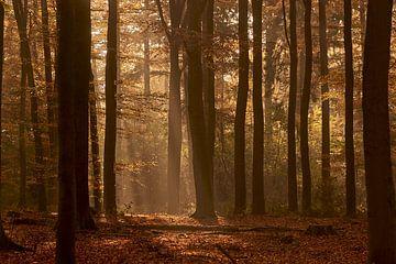 Ein Spaziergang im Wald von Gerhard Hoogterp