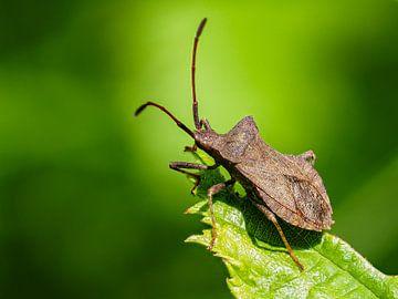 Käfer in Grün von Hans Hendriks