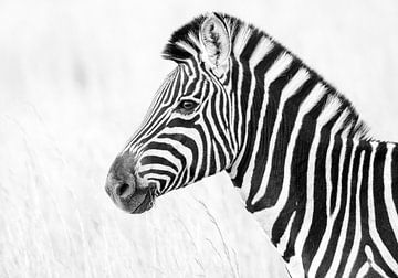 Schwarz und weiß gestreift von RobJansenphotography