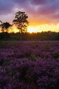 Zonsondergang op de paarse heide van