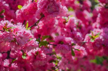 Roze wolk van bloemen van Daniëlle Beckers