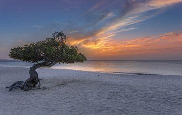 Divi Divi tree Aruba van Rene Ladenius Digital Art