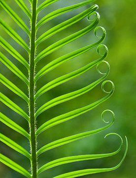 Nature's Green van Caroline Lichthart